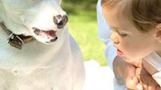 Idées reçues sur les chiens