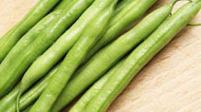 Rappel de haricots verts