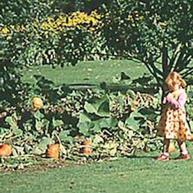 Les enfants du jardin - Les envie prennent vie du cote de chez vous ...