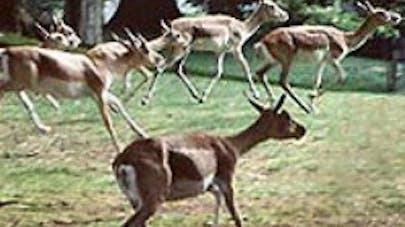 Parc zoologique de Cleres