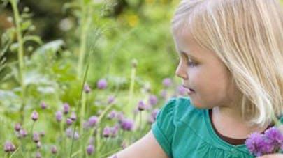 Pollens et allergies de retour