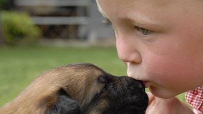 Les chiens susciteraient plus d'empathie que les   bébés