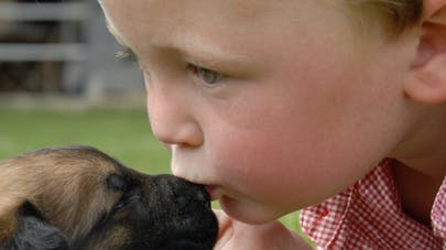 Les bébés comprennent que les animaux ne sont pas « vides   »