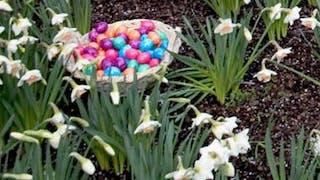 Chasse aux œufs de Pâques à Thoiry