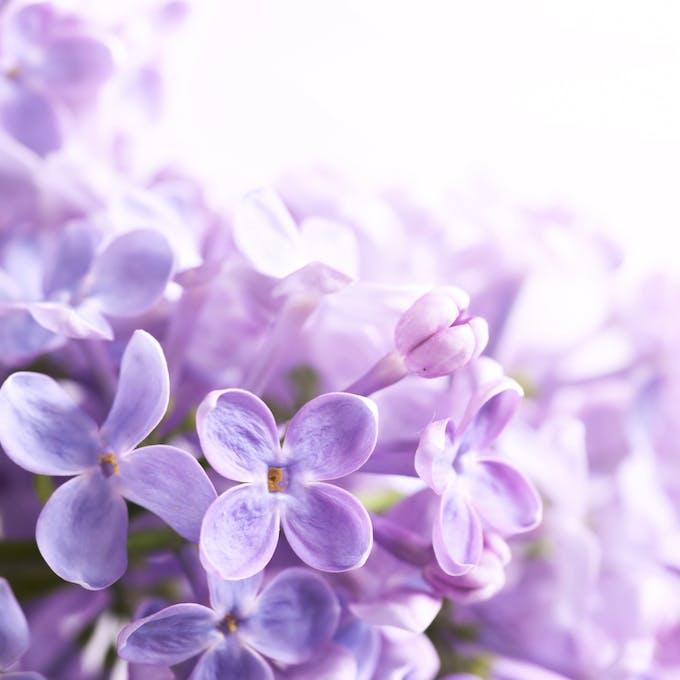 fleurs-image