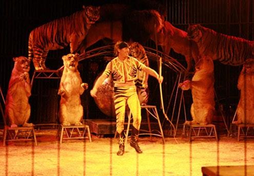 Les cirques de Noël 2011