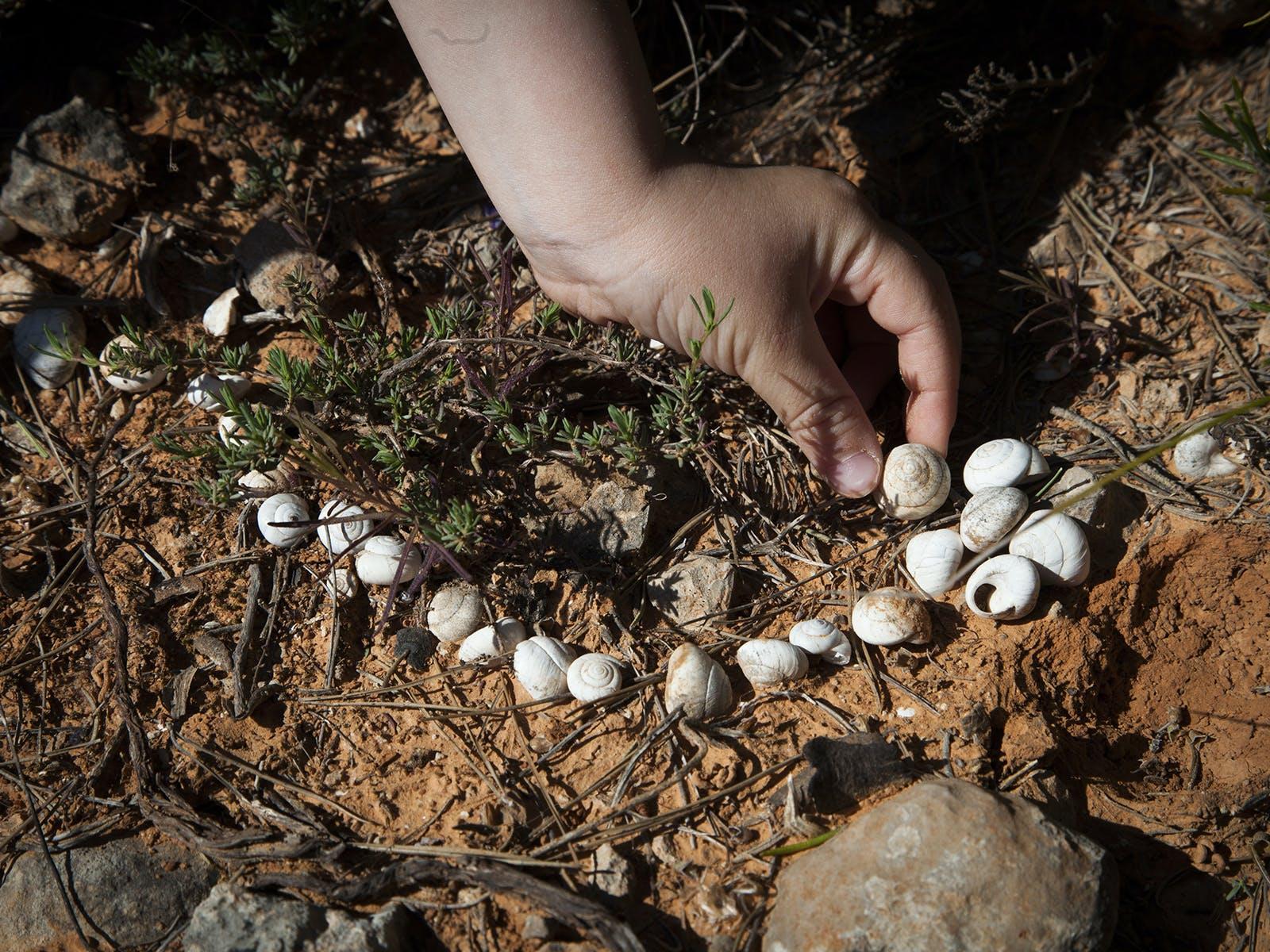 Land Art : un atelier sur la nature pour les   enfants