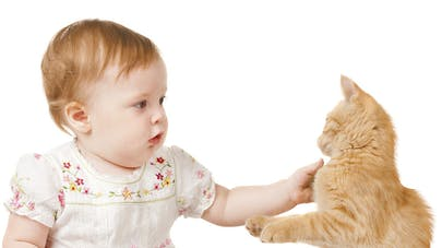 En Russie, un chat errant sauve la vie d'un bébé   abandonné