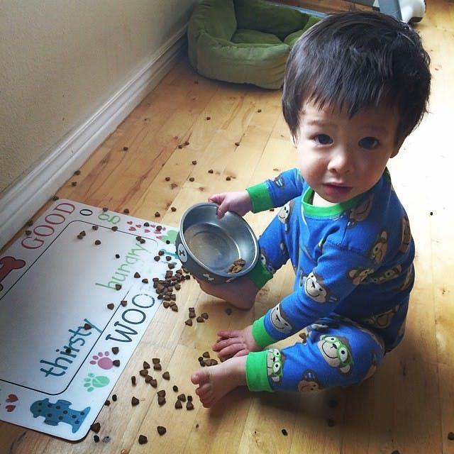 Il s'amuse avec les croquettes