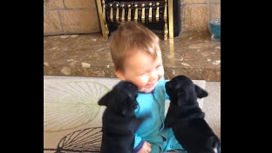 Vidéo : ce bébé hilare face aux câlins de deux   chiots