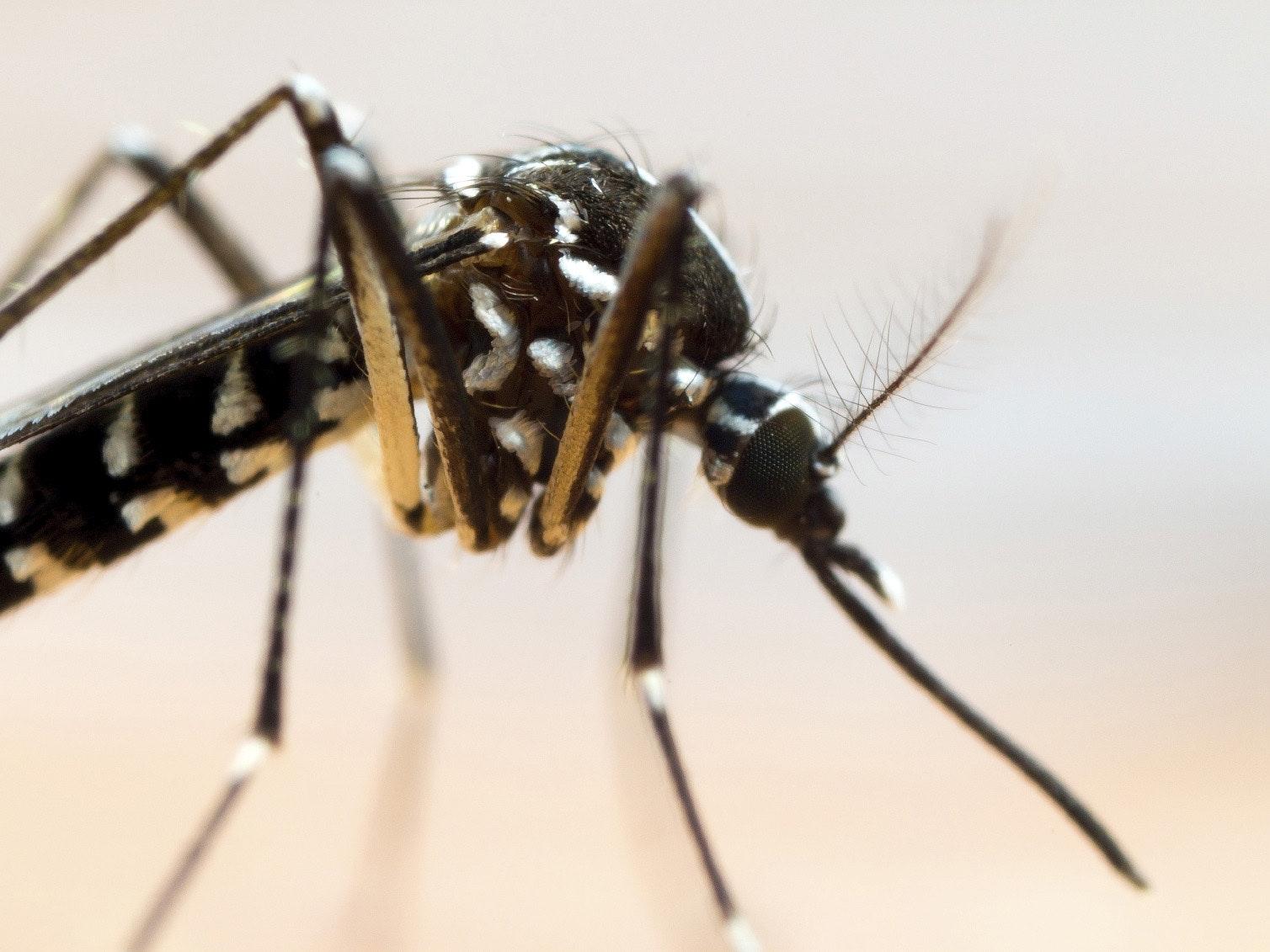 Virus Zika et femme enceinte: les  recommandations