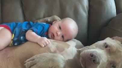 Mignon : Moment de tendresse entre un bébé et une chienne   (VIDEO)