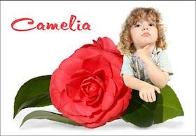 Les pr noms fleuris - Camelia prenom ...