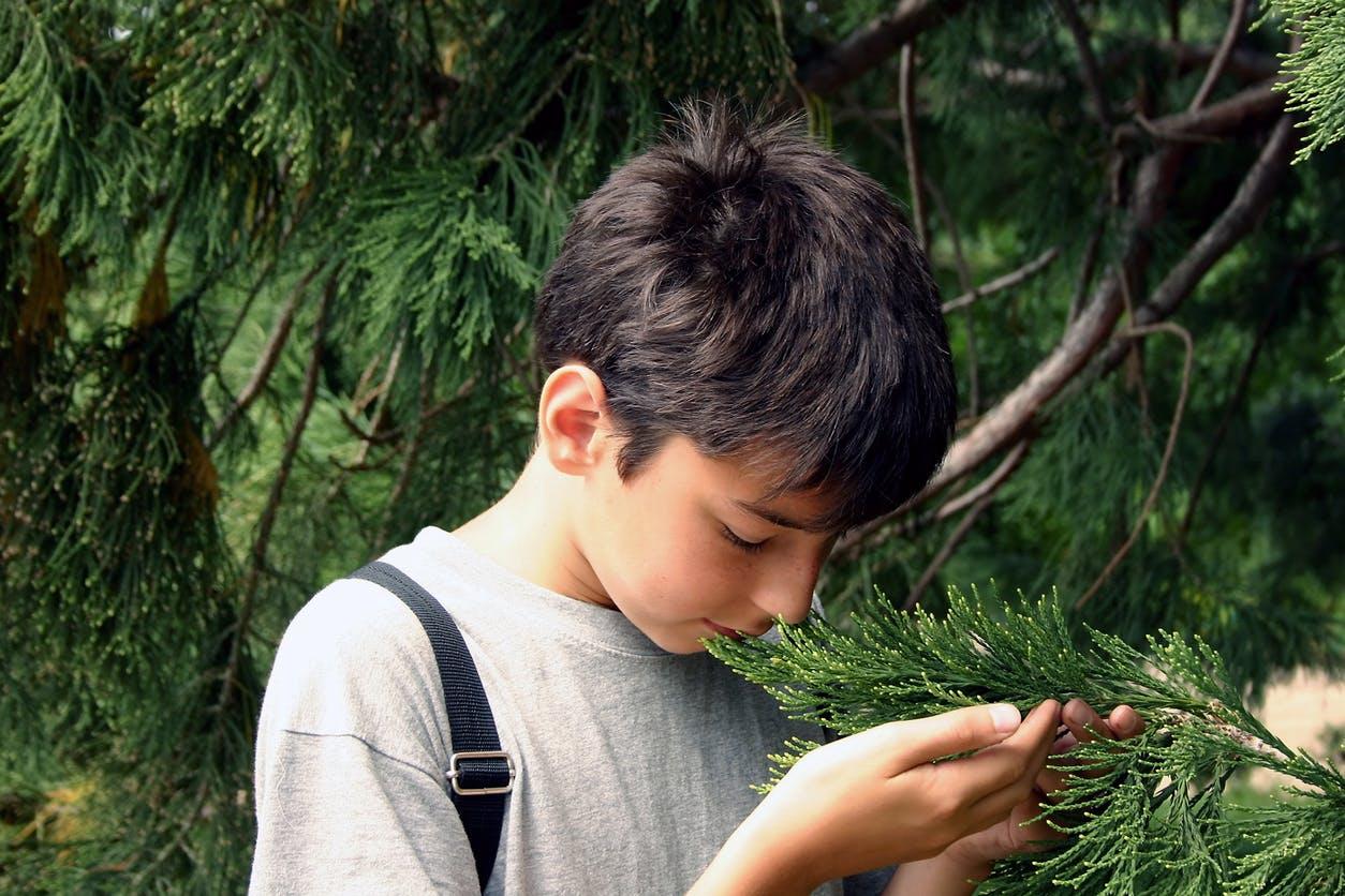 Allergie: le pollen de cyprès de retour dans le Sud