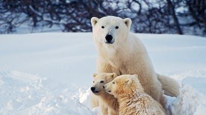 """25-26 mars: venez vivre des """"histoires d'ours"""" en famille au Muséum d'Histoire naturelle, à Paris"""