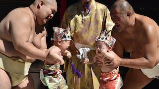 concours sumo et bébés hurleurs