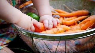 mains de bébé touchent carottes
