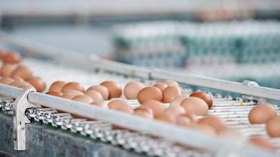 Œufs contaminés au fipronil : un risque pour les enfants ?