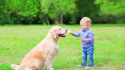 A 18 mois, il part seul promener son chien