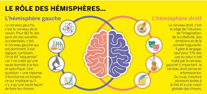 schéma cerveau