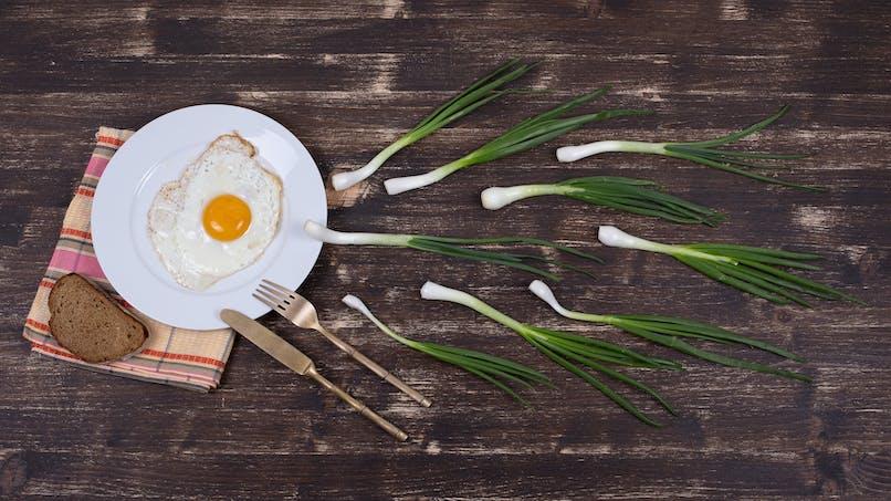 10 questions sur l'ovulation