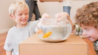 Déménagement : comment préparer son enfant