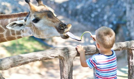 Sa première visite au zoo
