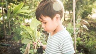 Les dangers du jardin pour les enfants