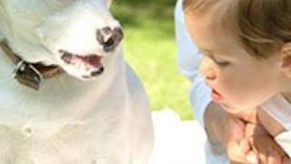 Votre chien et Bébé