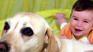 Une comportementaliste canin répond à vos   questions