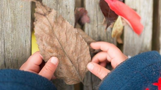 Comment sensibiliser vos enfants à l'écologie ?