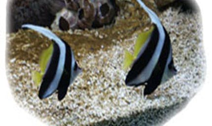 Aquarium du Roc