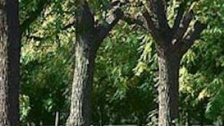 Arboretum de Chèvreloup