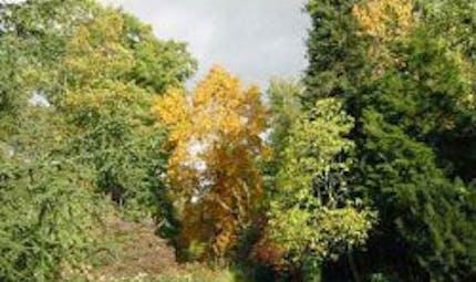 Arboretum de La Balaine
