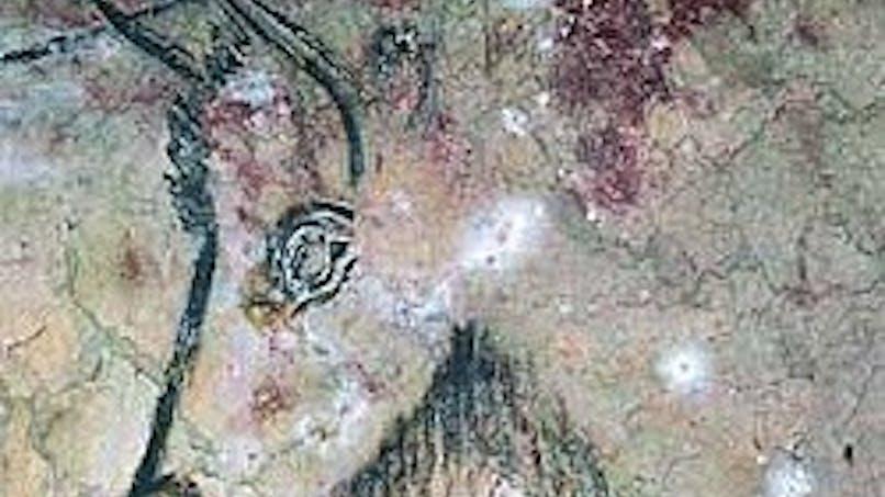 Grottes de Niaux