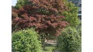 Jardin botanique du Montet