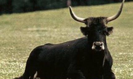 La Ferme de l'Aurochs