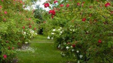 Les jardins de Thoiry