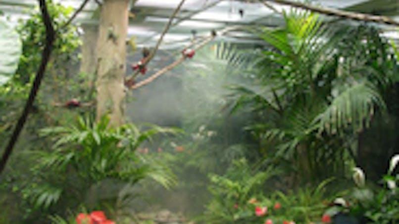 Micropolis, Cité des insectes