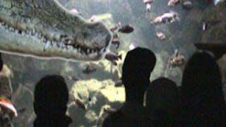 Parc Aquarium Les Naïades