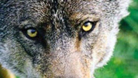 Parc animalier des loups du Mont Guerêt