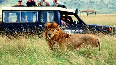 African Safari (31)