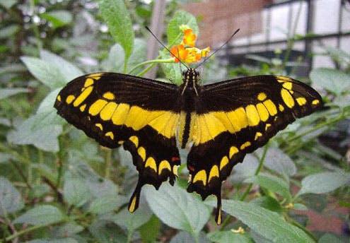 Le Jardin des papillons (56)