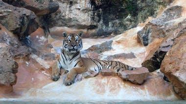 Zoo de la Barben (13)