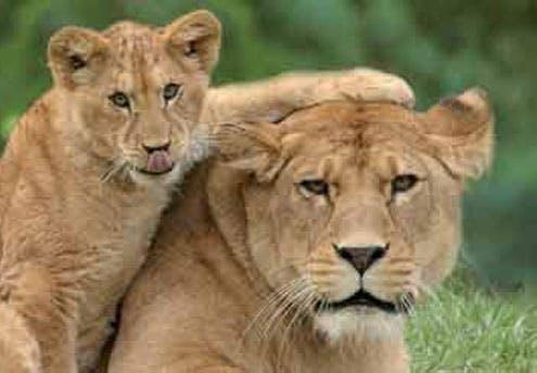Zoo des Sables d'Olonne (85)