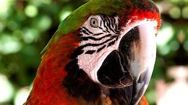 Zoo exotique de Sanary et Bandol (83)