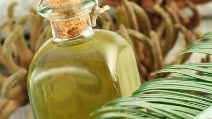 Idées reçues sur l'huile de palme