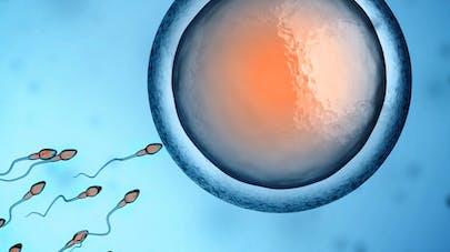ovocyte et spermatozoïdes