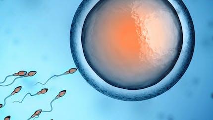FIV:un premier bébé est né grâce à la   recherche embryonnaire accélérée