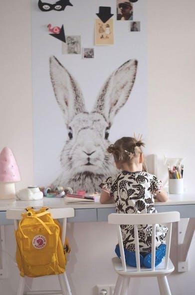 Bunny Wallpape